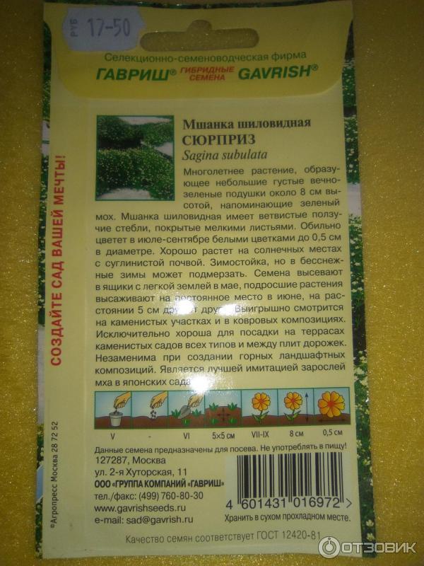 Мшанка шиловидная выращивание из семян в открытом грунте 59