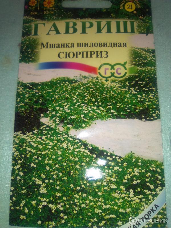Мшанка шиловидная выращивание из семян в открытом грунте 7