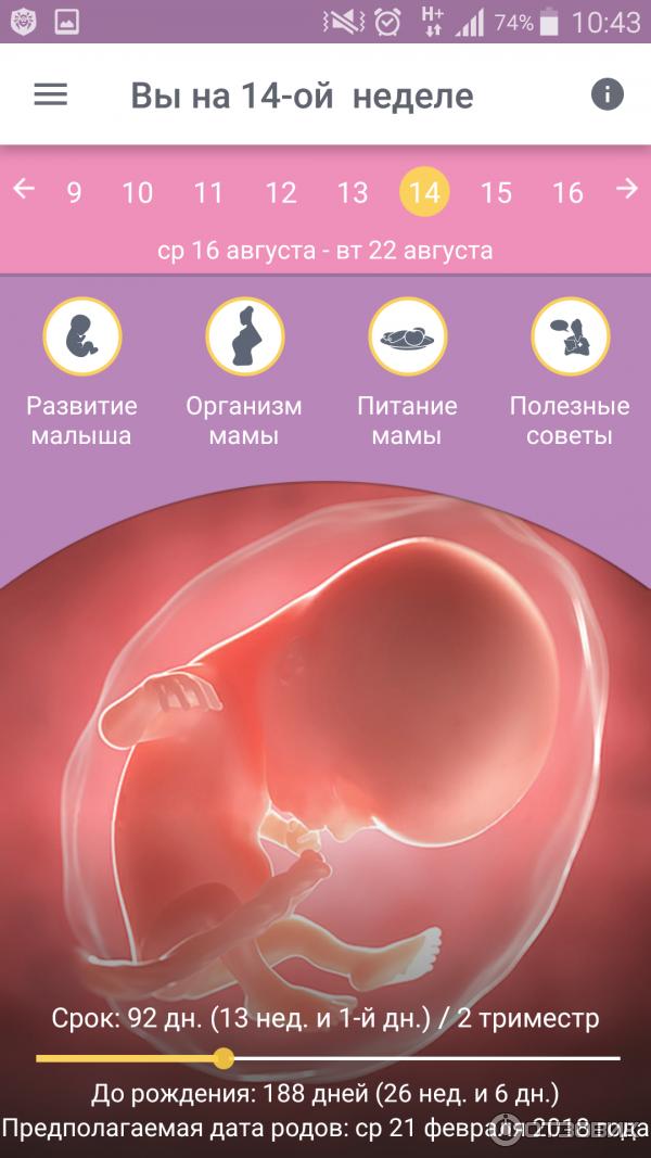 Программа для беременных по неделям 34