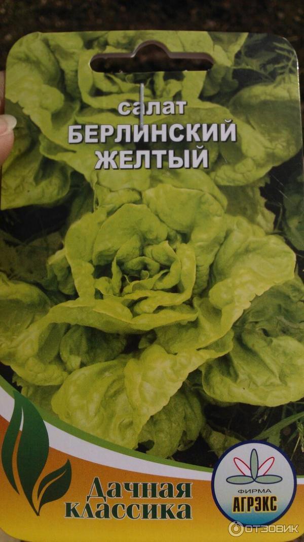 Салат листовой берлинский желтый