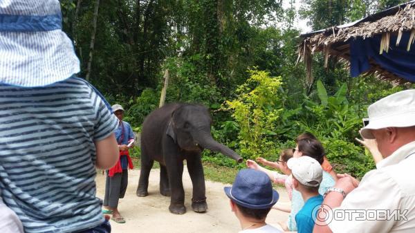 Таиланд экскурсии отзывы