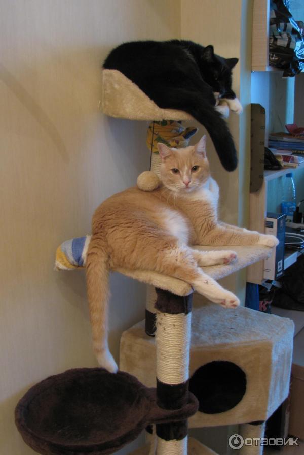 Как сделать так чтобы кот не дрался