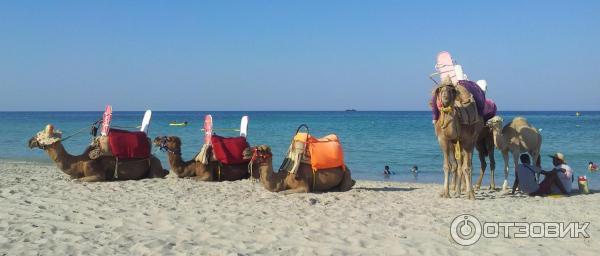 sunmar minimum 2 djerba 3 тунис джерба
