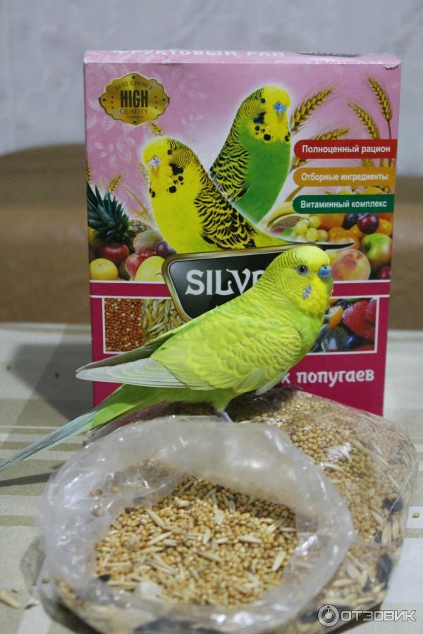 Как сделать корм для попугаев своими руками 73