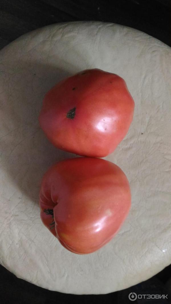 Помидоры розовый бизон выращивание 3