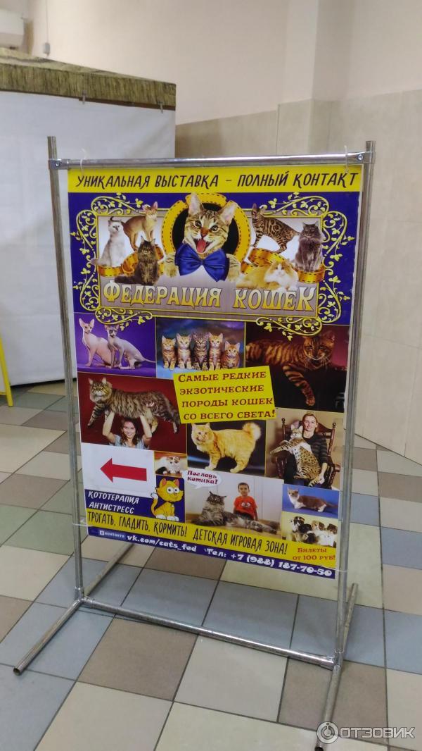 женские музей выставки для детей в чебоксарах повседневного применения можно