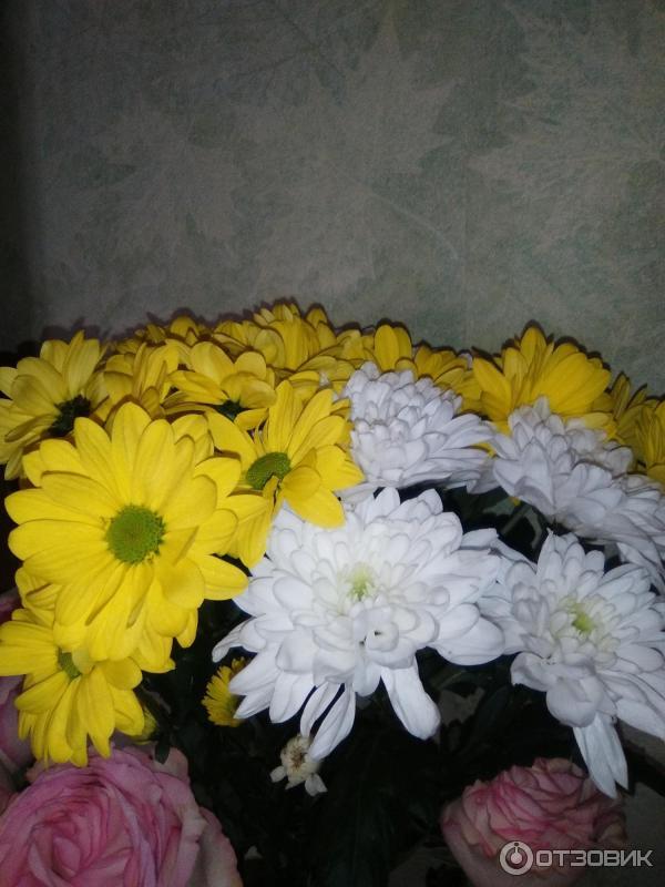 Александра цветы миасс