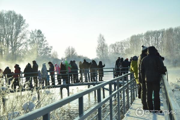 лебединое озеро рыбалка