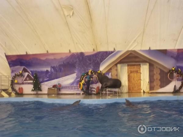 дельфинарии рядрм с анапой западноевропейских восточных источниках
