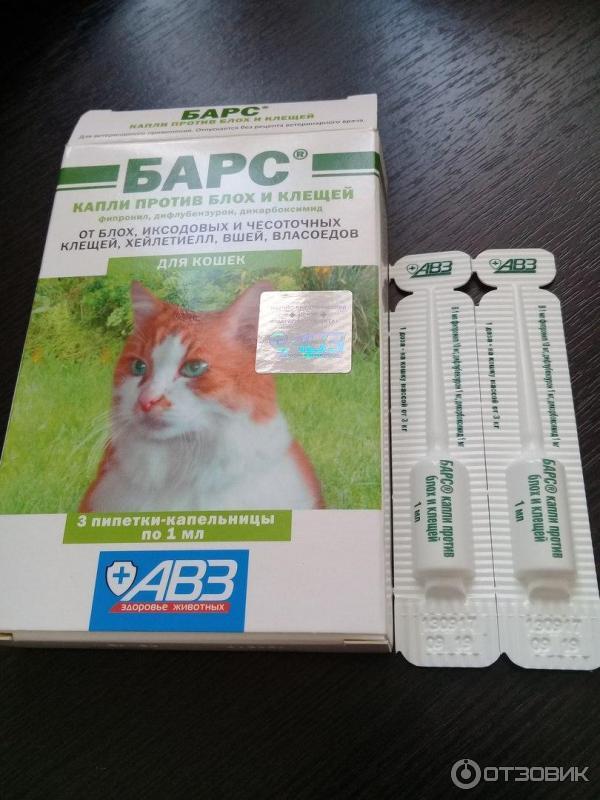Блохи у котят: признаки и пути заражения, способы борьбы в зависимости от возраста животного, профилактика.