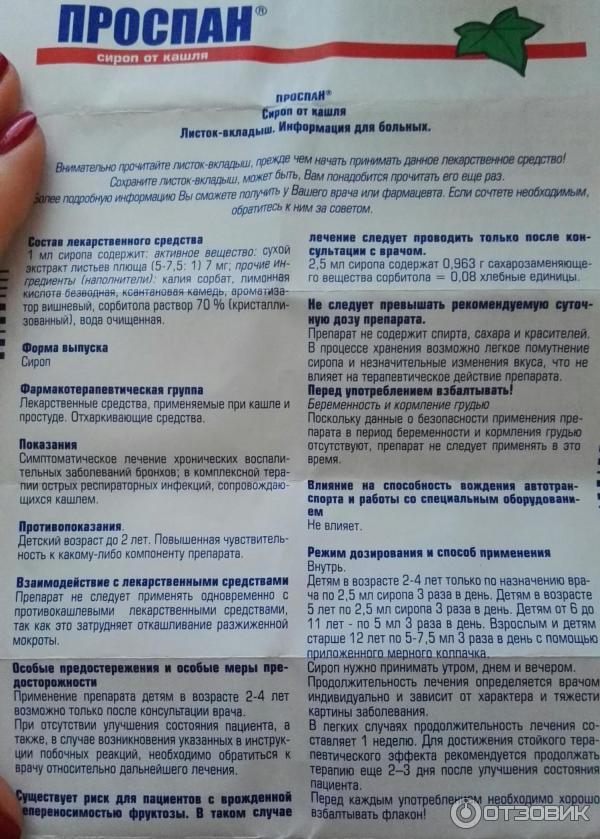 Укроп - польза и вред для здоровья организма