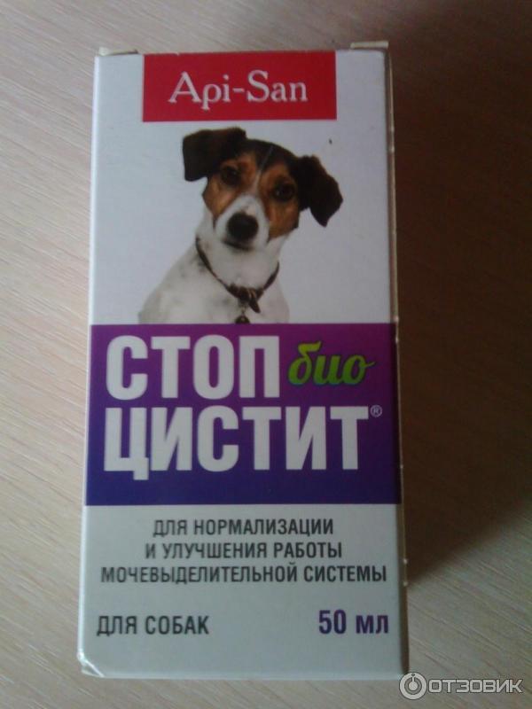 цистит у собаки застудили чем лечить