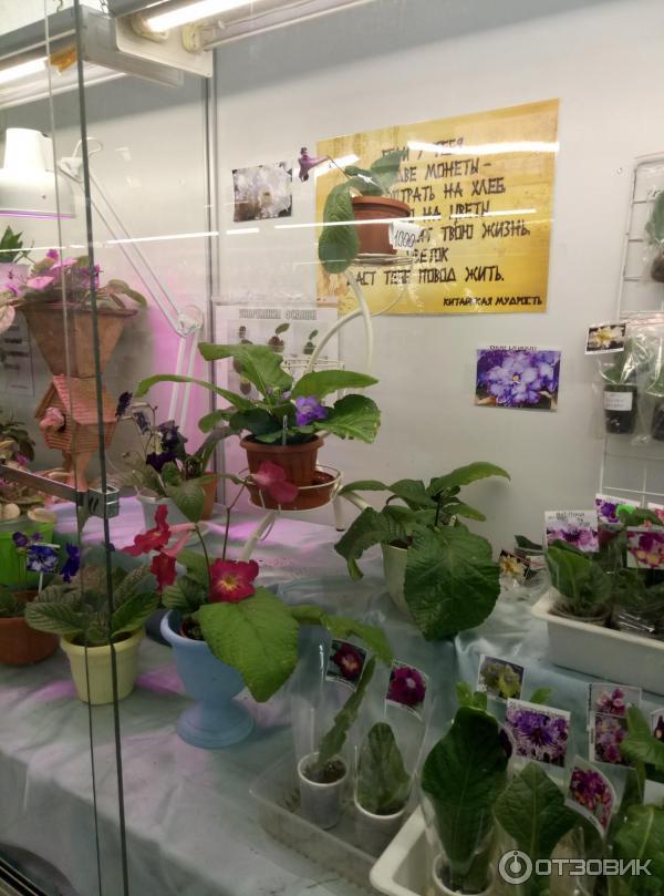 Доставкой цветы, магазин цветов на ввц