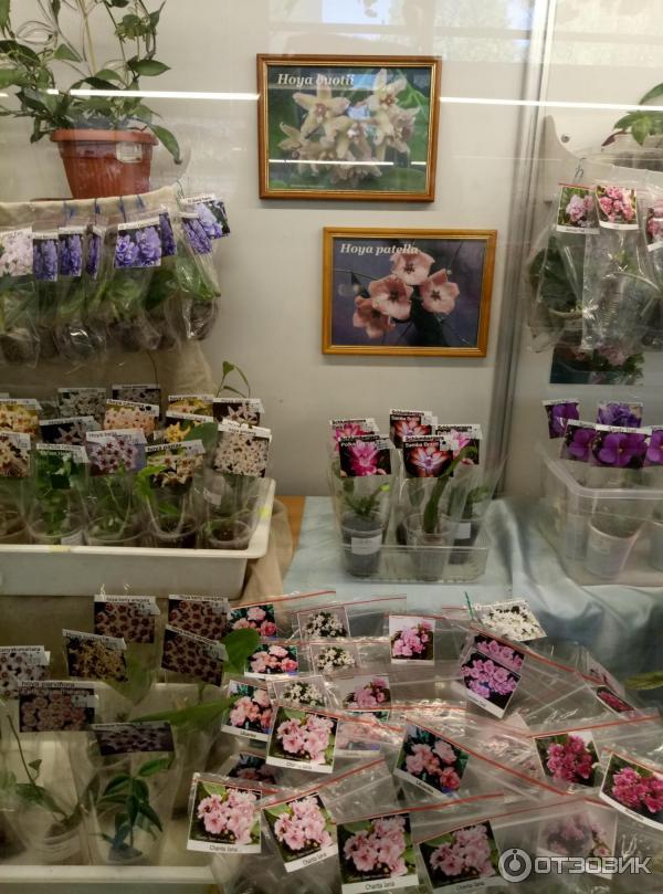 Магазин цветов на ввц, букет питере круглосуточной