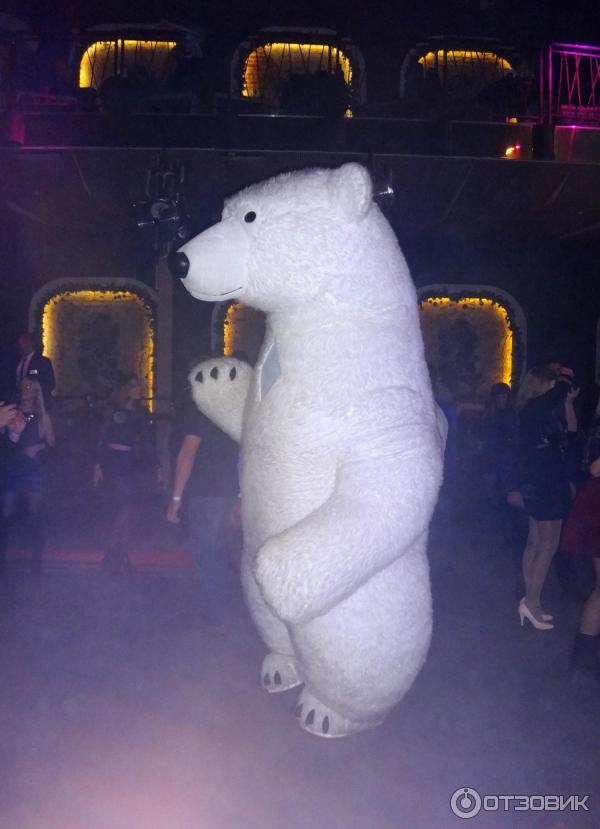 ночной клуб белый медведь воронеж