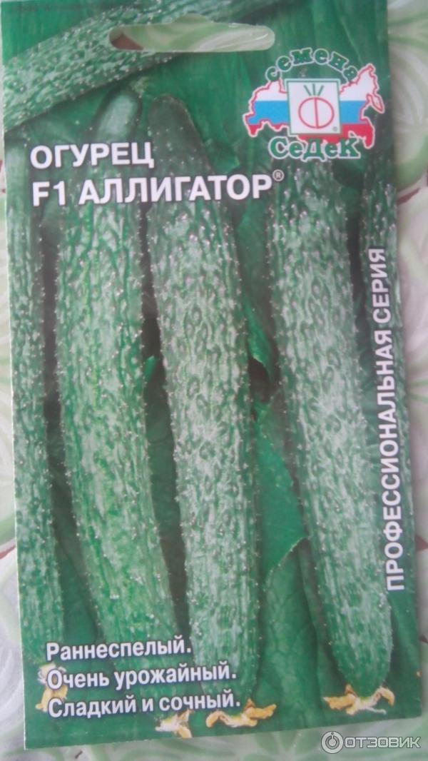Огурцы аллигатор отзывы фото