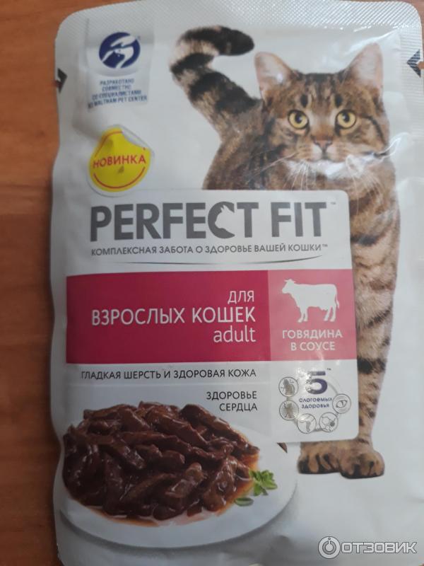 установка пластиковых корм для кошек перфект картинки способен управлять ледяной