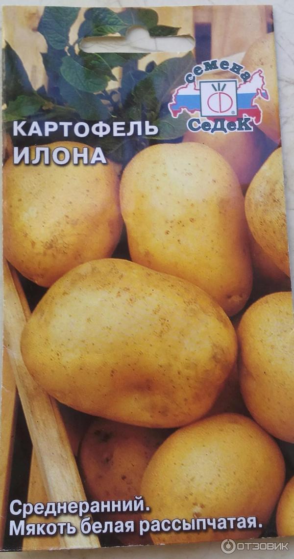 картофель илона описание сорта фото богатых итальянских