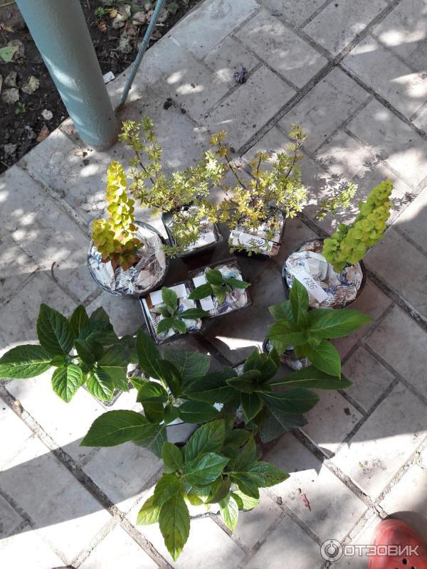 интернет магазин цветы поволжья пусть